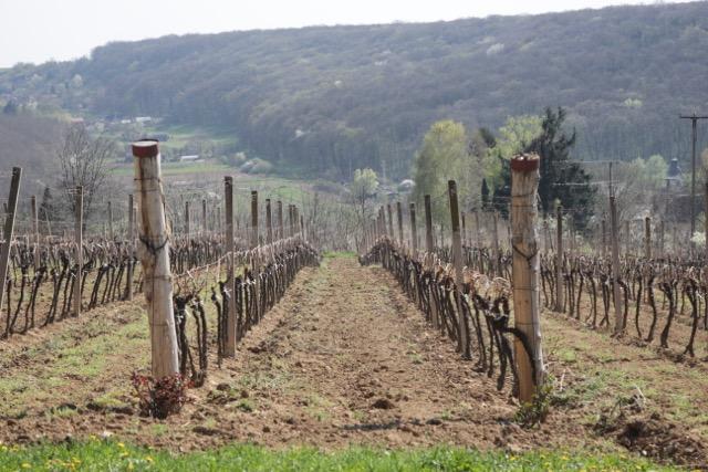 vinarija in 5