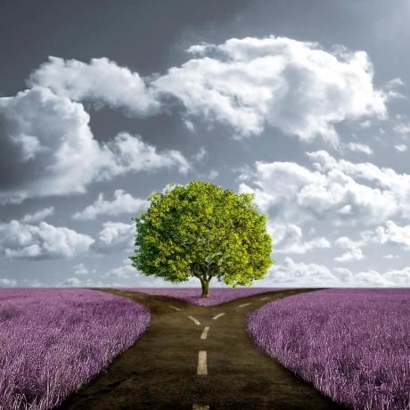 Na raskršću razuma i osećanja