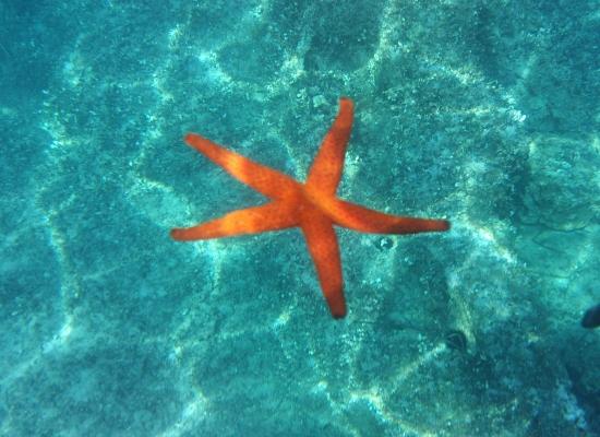Morska zvezda na Tasosu